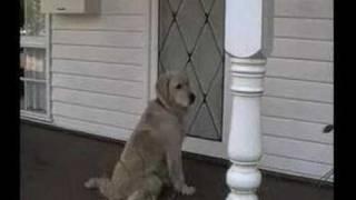 Charlie the Wonder Dog -