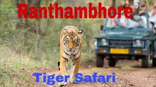 Ranthambore wild Life safari - Tiger Sightseeing