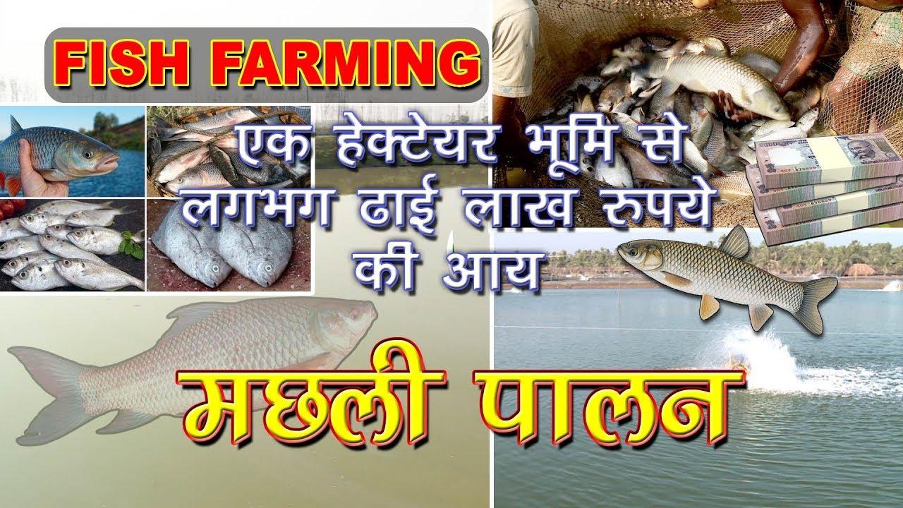 Scientific fish farming in india fish for Fish farming business