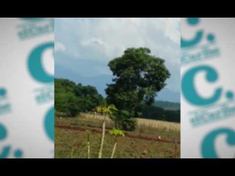 Haitianos ilegales continúan llegando al país