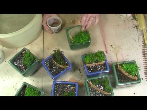 Miniature Garden Ideas - Mini Personalized Gifts, Wedding Favors, Fairy Garden Party Ideas
