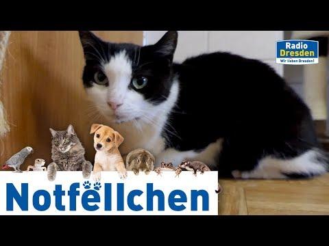 Radio Dresden - Notfellchen November