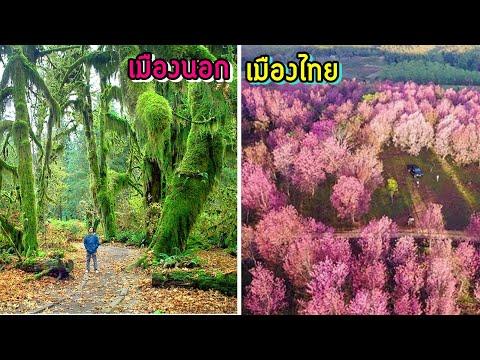 9 สถานที่ที่คุณจะได้สัมผัสกับต้นไม้ที่สุดมหัศจรรย์และน่าตื่นตาตื่นใจ