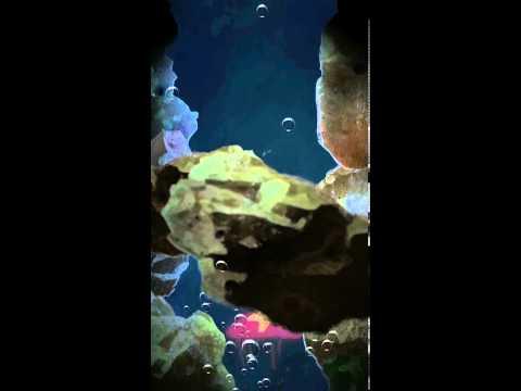 Sea Wonder2
