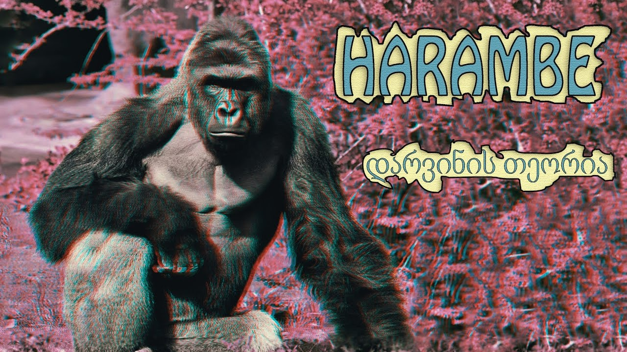 Harambe ( Pele ) - დარვინის თეორია (prod. by HaruTune)