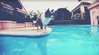 Как научить собаку плавать и приучить к воде | Чихуахуа Софи(Чихуахуа Софи о способах, как научить собаку плавать и приучить собаку к воде. Подпишись на догмаму Аню..., 2014-08-14T15:17:27.000Z)