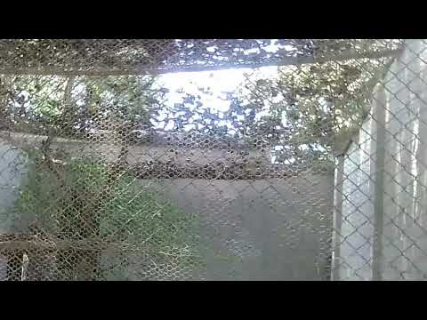 ZOO One Video Double Animal...7