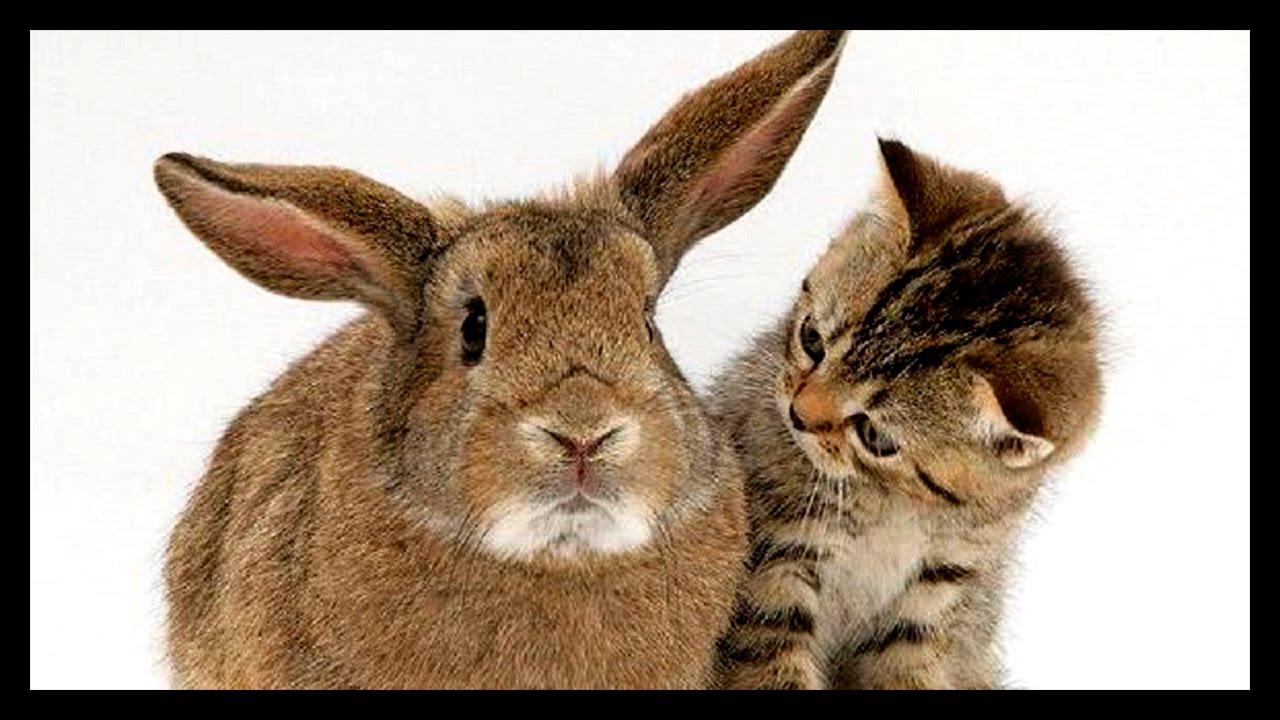 Открытки зайчик и котик, картинки надписями