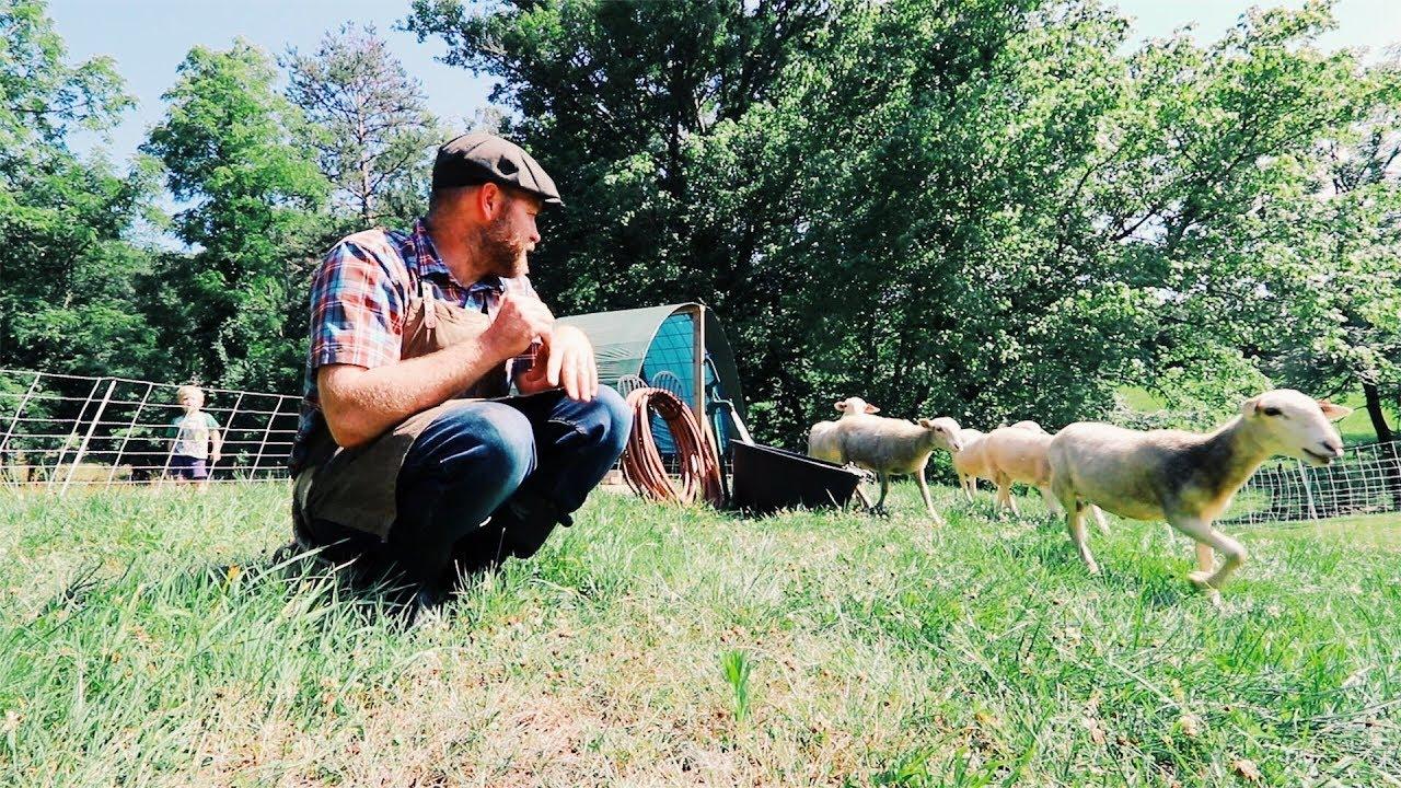 sheep-s-bad-mow-job-i-won-t-give-up-yet