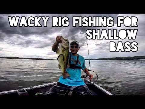 Wacky Rig Fishing For Shallow Bass