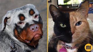 7 animais que NASCERAM com condições especiais