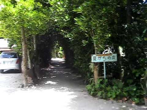 備瀬のフクギ並木を自転車で進む