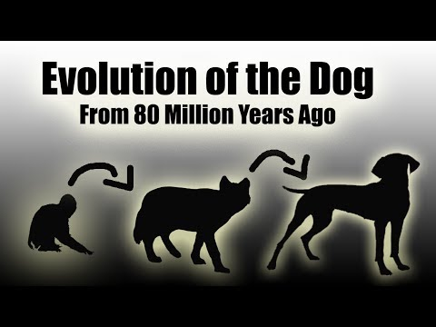 TIMELAPSE: Evolution Of The Dog (EVERY YEAR) - 80 Million Years In a Video (HD)