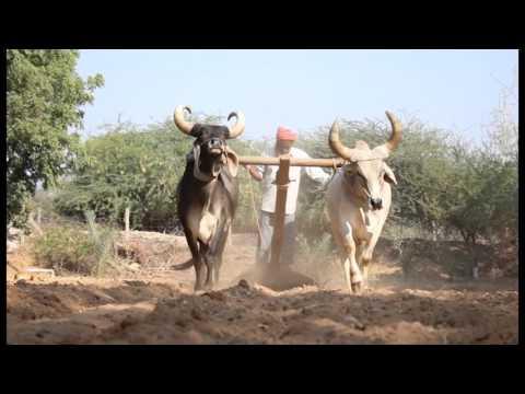 Shri RamKrushna Trust - A short intro...!