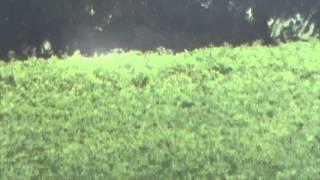 PA Ground Hog Hunting