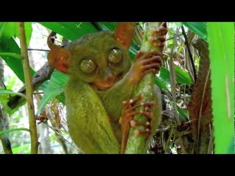 Tarsier - Bohol Tour Package - WOW Philippines Travel Agency