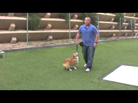 San Diego Dog Boarding and Training - (858) 643-0010