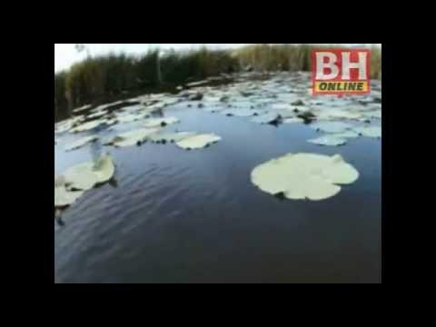 BHPLUS: Ular sebesar tong di Tasik Chini