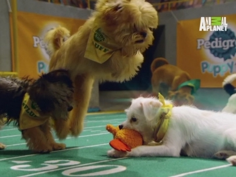 Adorable action from this year's Puppy Bowl