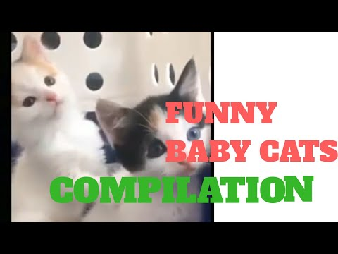 Funny Baby Cats Compilation/Cute and Hilarious Cats