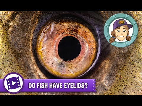What fish has eyelids buzzpls com for What fish has eyelids