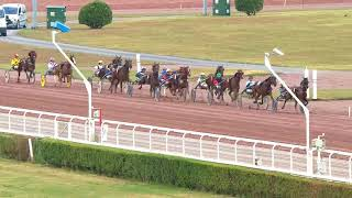 Vidéo de la course PMU PRIX DE NOUZONVILLE