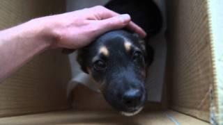 Возьмите щенка (Нижний Новгород)