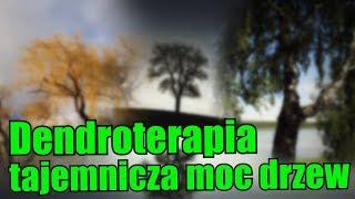 Dendroterapia, czyli technika przyjmowania energii drzew!