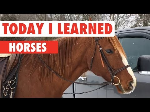 Today I Learned: Horses