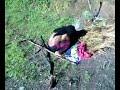 TNI Hajar OPM yang sudah menyiksa warga sipil Papua