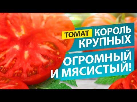 ОДИН ТОМАТ - ЧАШКА САЛАТА! СОРТ КОРОЛЬ КРУПНЫХ | крупноплодные | томатов_2019 | урожай_2019 | томаты_2019 | огромные | мясистые | томатов | томаты | семена | лучшие