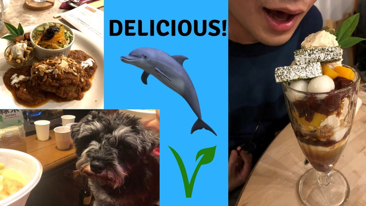 Our vegan meal after a dolphin activism day in Wakayama + cute dog