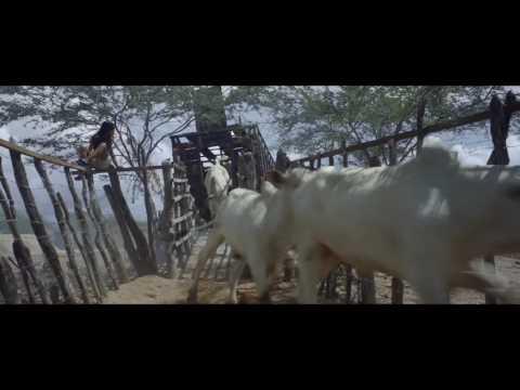 Film Trailer: Boi Neon / Neon Bull