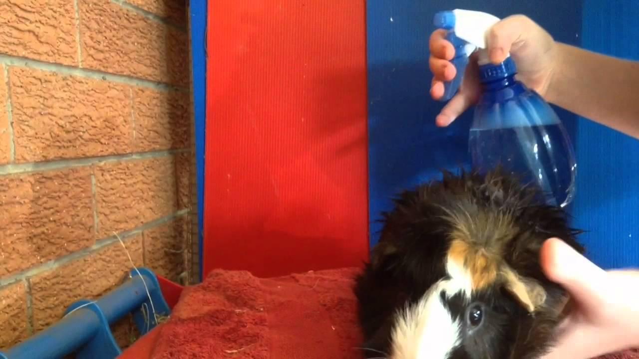 Hamster Ball Ps3