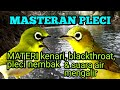 Masteran Pleci Materi Kenari Blackthroat Pleci Nembak Terapi Suara Air  Mp3 - Mp4 Download