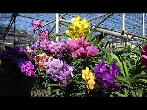 Bai Orchid and Butterfly Farm, Chiang Mai, Thailand