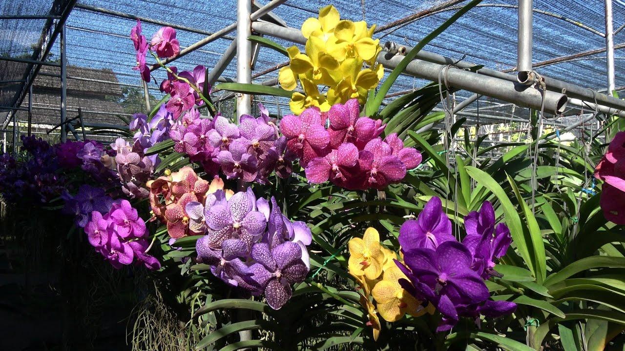 Lan là một trong những loài hoa đẹp nhất, có đến hơn 750 chủng loại Lan.