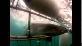 shark attack humans