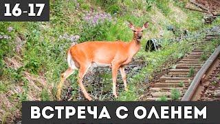 Нью-Джерси, шарады и дикий олень / дни 16-17