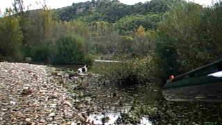 chasse au gibier d eau springer