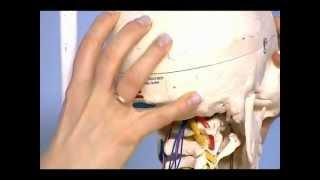 Основные симптомы и лечение синдрома вертебро–базилярной недостаточности
