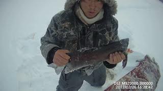 Russia заключительный день рыбалки на ленка - вот она удача Yakutia