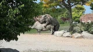 Metro Toronto zoo white rhino