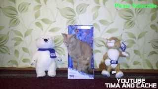 Кот Кеша - Талисман Олимпийских игр в Сочи 2014 / funny cats