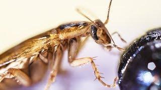 NASAは何のために貴重な月の土壌をゴキブリに食べさせたのか?