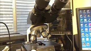 Polarized Light Microscopy Reveals Hidden Beauty