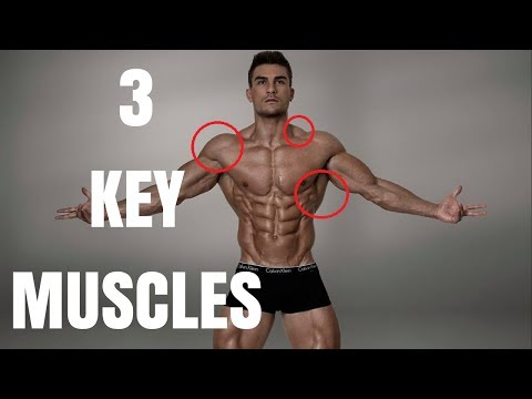 3 Key Muscle-Groups That Make You Look Bigger