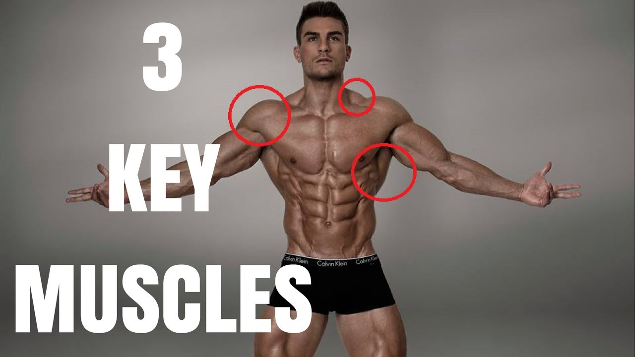 Muscles That Make You Look Big