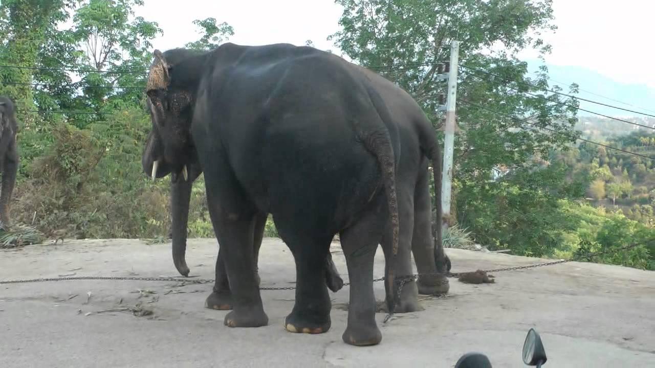 sеx slon