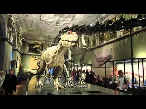 Allosaurus [Natural History Museum Vienna]